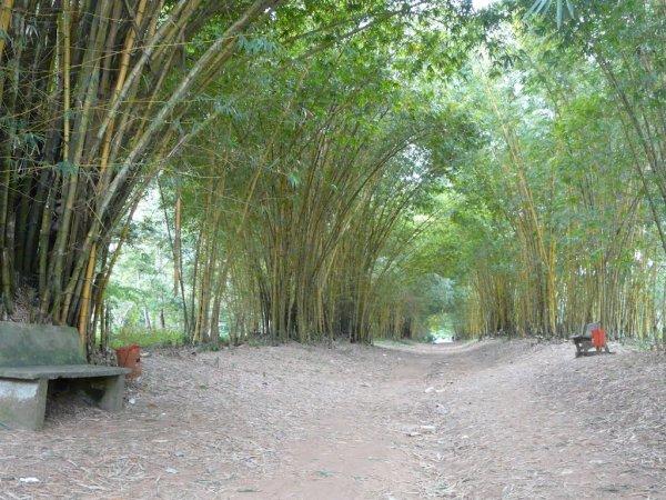 Jardin Botanique de Bingerville