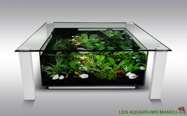 MANOU in (Aquarium)